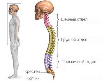 Межпозвонковая грыжа грудного отдела позвоночника